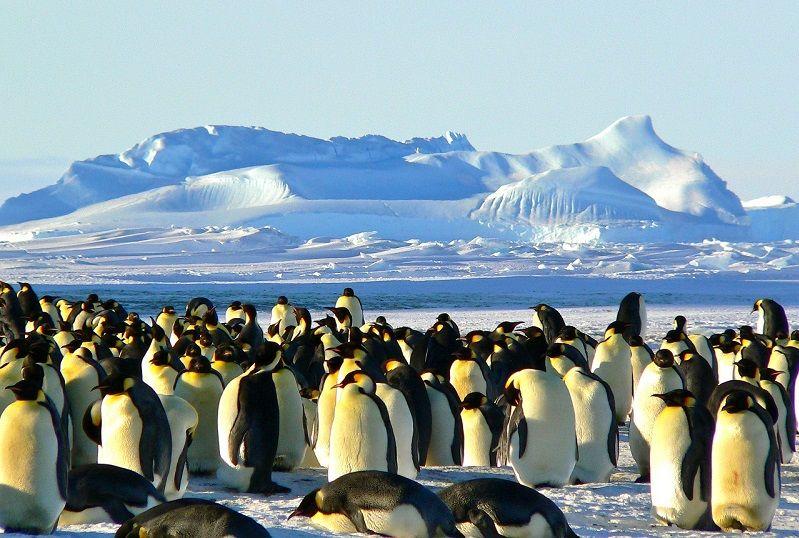 Des manchots rencontrés lors d'une croisière en Antarctique